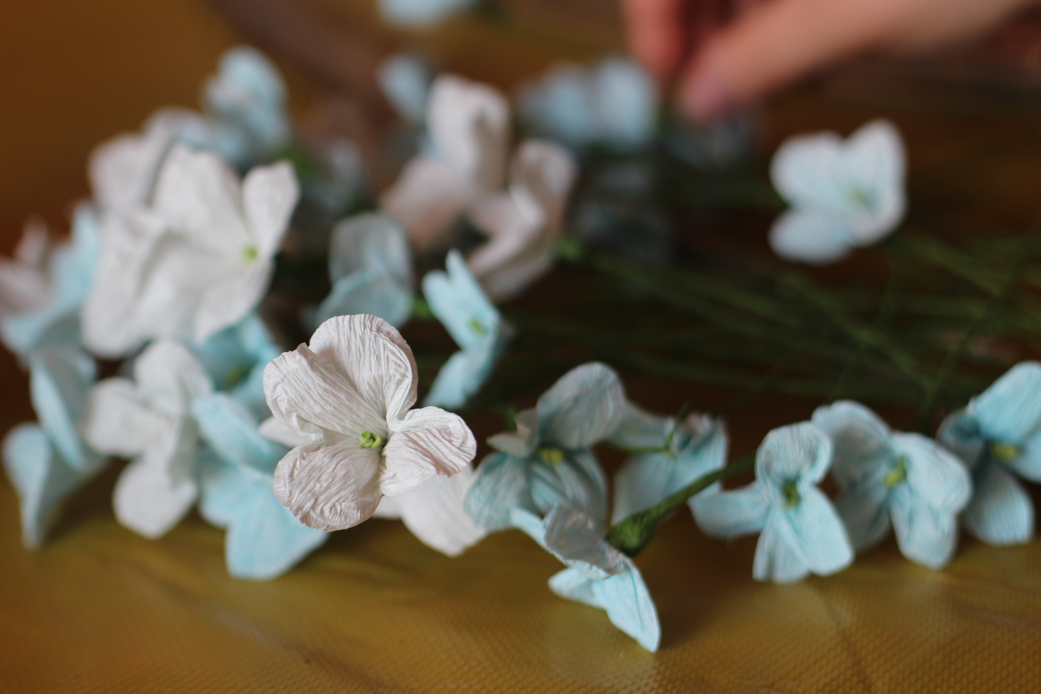 hortensję tworzy mnóstwo pojedynczych kwiatków